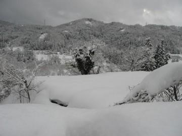 本当はこの下に常願寺の川が流れているんですが、雪の壁で見えないのです。
