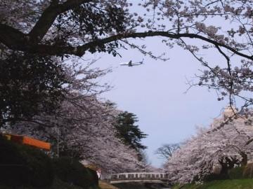 このすぐ横に富山城が在り、どこから見ても絵画の世界ですね。