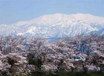白いブラウスに、ピンクのスカートって感じかな? 春ならではの景色ですね (^・^)