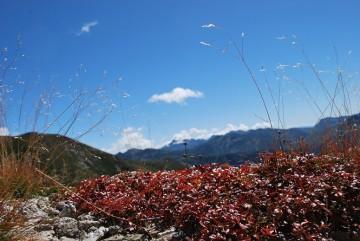 チングルマの葉っぱが、えんじ色に眩しい位、輝いてる。