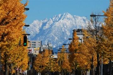 銀杏並木と剣岳。 きれいに色付いた木々の間から、勇壮な剣岳がドーンと大きく望める。