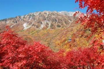 タンボ沢の秋。燃える様な赤に染まったナナカマド。