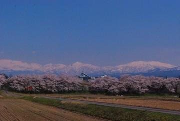 どうしても薬師岳ダケが目立って・・ 端っこに立山が写ってます。剣は入りませんでした。ゴメ~ン(-.-)