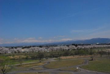 高台から見る千本桜と立山連峰。川の名前は「神通川」。大物揃いでグランドビュー!