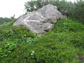 この大岩の矢印が薬師平の入り口間際に見えます。 ここを通って下さい。右方向です。
