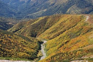 黒部川源流へと続く、右俣の見事な紅葉。