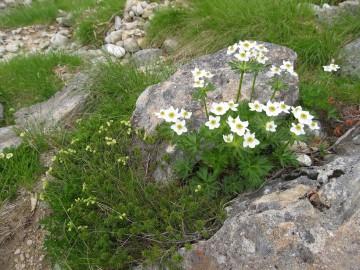薬師峠の終盤に、いっぱい咲いてます。 コロンとした丸い形が可愛いツガザクラ。