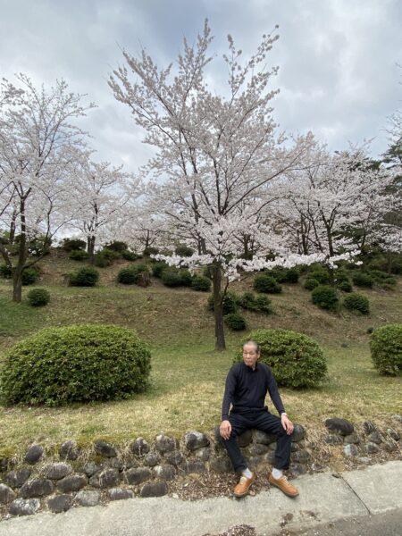 寺家公園の桜